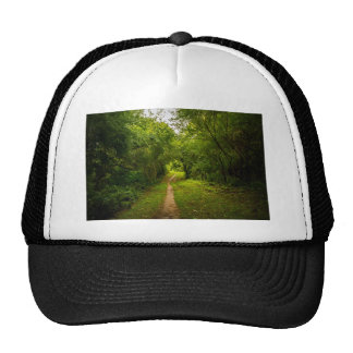 Pista de senderismo a través de las maderas gorras de camionero