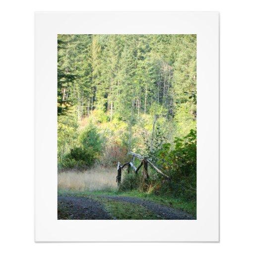 Pista de senderismo de las secoyas de los árboles fotografías