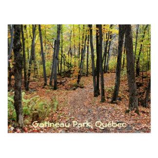 Pista de senderismo en otoño, parque de Gatineau,  Tarjeta Postal