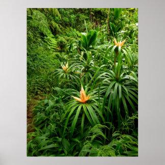 Pista de senderismo hawaiana posters