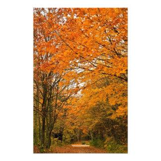 Pista del bosque del otoño impresión fotográfica