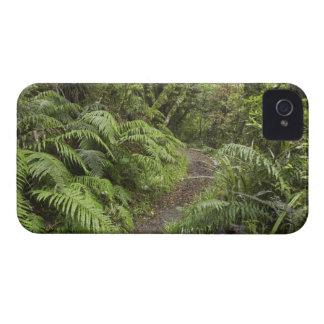 Pista que camina a las caídas de Dawson, Mt iPhone 4 Cárcasa