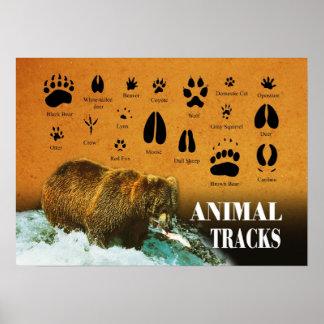Pistas animales poster