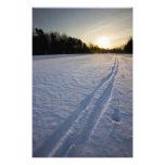 Pistas del esquí en el coto de la granja de Willow Arte Fotografico