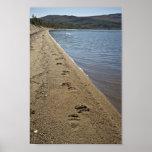 Pistas del oso grizzly, lago Sithylemenkat Posters