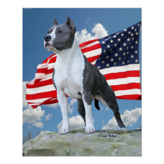 Pit Bull (American Staffordshire Terrier) poster
