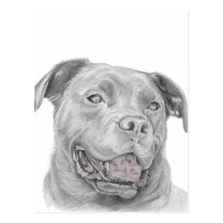 Pit Bull Art Drawing Postcard