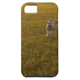 Pit Bull iPhone 5 Cover