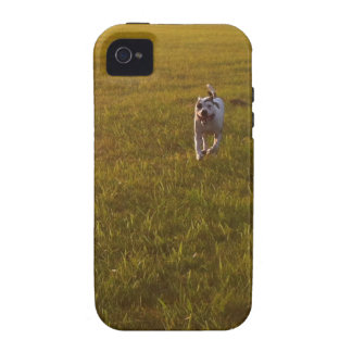 Pit Bull iPhone 4 Cover