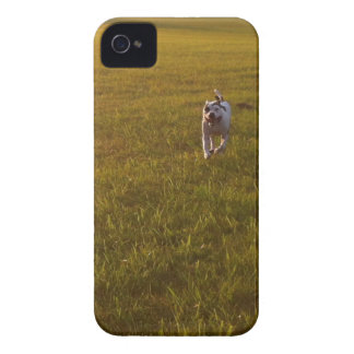 Pit Bull iPhone 4 Case