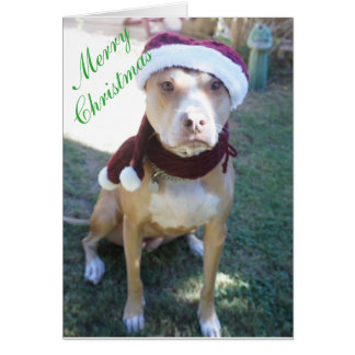 Pit Bull Christmas Card