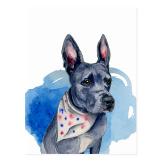 Pit Bull Dog Blue Watercolor Painting Postcard