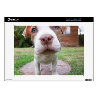 pit bull dog brown nose close acer chromebook decals
