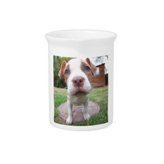 pit bull dog brown nose close drink pitcher
