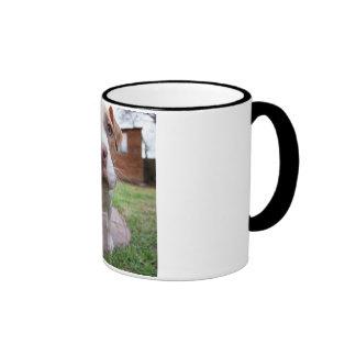 pit bull dog brown nose close ringer mug