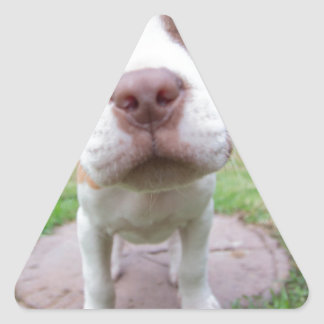 pit bull dog brown nose close triangle sticker