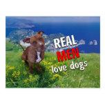 Pit-bull Dog Postcard