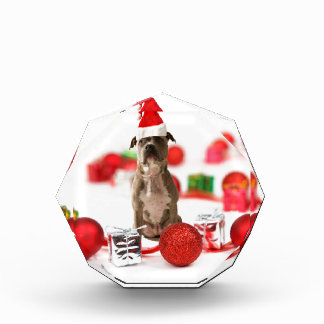 Pit Bull Dog with Gift box and Christmas Ornaments