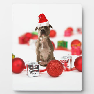 Pit Bull Dog with Gift box and Christmas Ornaments Plaque