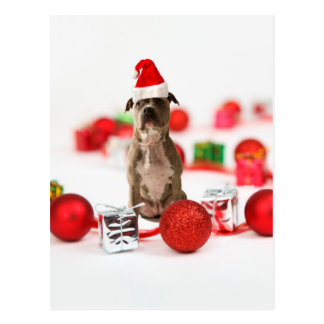 Pit Bull Dog with Gift box and Christmas Ornaments Postcard