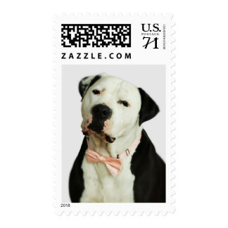Pit Bull in a Bow Tie Postage