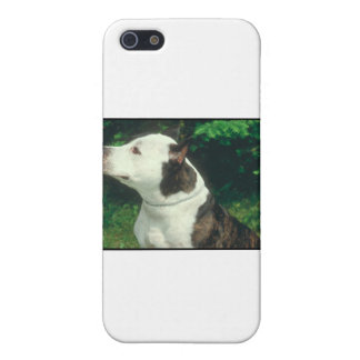 Pit Bull iPhone SE/5/5s Cover
