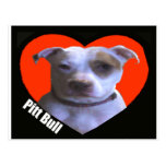 Pit Bull Love Post Cards