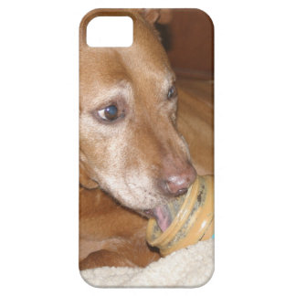 pit bull loves peanut butterpeanut iPhone SE/5/5s case