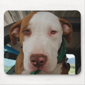 Pit Bull Mix Mousepad
