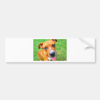 Pit Bull Puppy Close-up Bumper Sticker