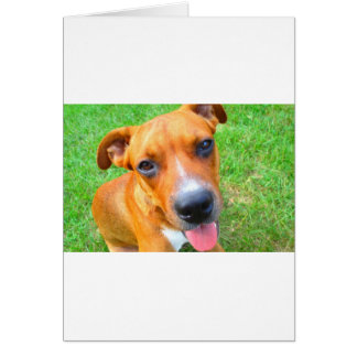 Pit Bull Puppy Close-up Card