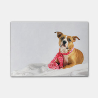 Pit Bull Puppy Love in Pink XOXO Post-it Notes