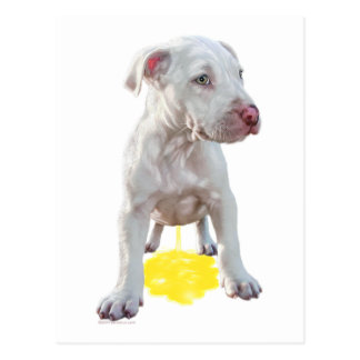 Pit Bull Puppy Piddles OOPS Postcard