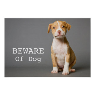 Pit-Bull Puppy Poster