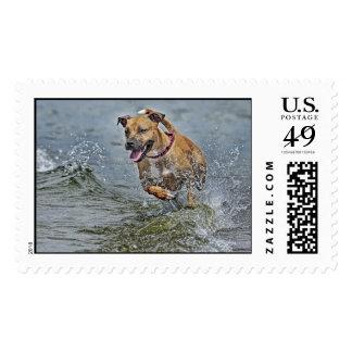 Pit Bull Rescue Vegas Stamp
