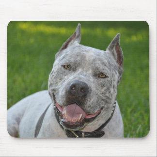 pit bull sharky mousepad dog pitbull smile