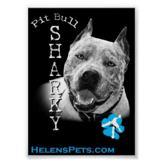 pit bull sharky poster