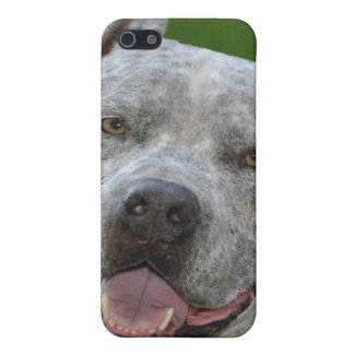 pit bull sharky smiley face iPhone SE/5/5s cover
