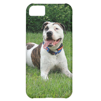 Pit Bull T-Bone Case For iPhone 5C