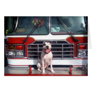 Pit Bull T-Bone Fire House Dog Card
