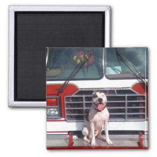 Pit Bull T-Bone Fire House Dog Refrigerator Magnet