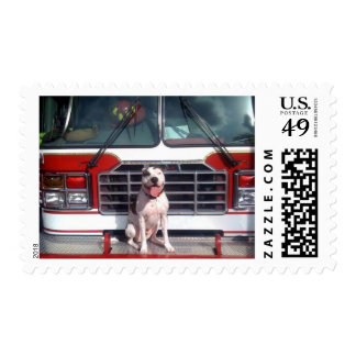 Pit Bull T-Bone Fire House Dog Postage Stamp