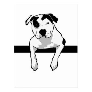 Pit Bull T-Bone Graphic Postcard