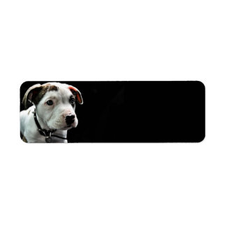 Pit Bull T-Bone Return Address Label