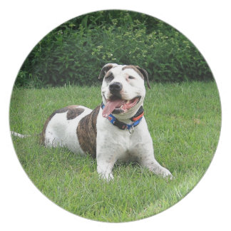 Pit Bull T-Bone Party Plate