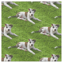 Pit Bull T-Bone Puppy Fabric