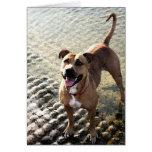 Pit Bull Terrier Card