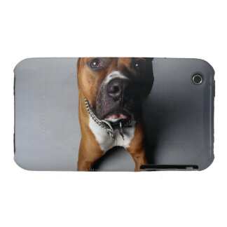 Pit Bull Terrier Lying Down iPhone 3 Cover