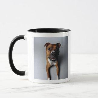 Pit Bull Terrier Lying Down Mug