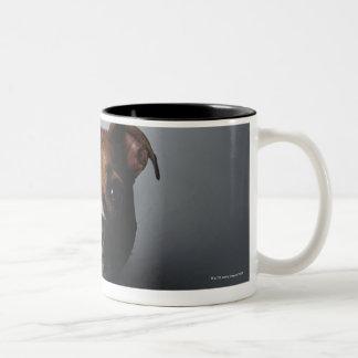 Pit Bull Terrier Lying Down Mugs